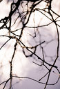 Dead tree branch Royalty Free Stock Images