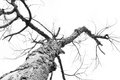 Dead tree branch black and white Stock Photo
