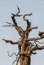 Dead tree branch in outdoor Stock Photos