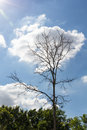 Dead tree on cloud and blue sky Stock Photography