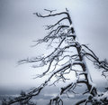 Dead tree covered with snow on a distant winter landscape Stock Images