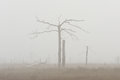 Dead tree in the fog Stock Image