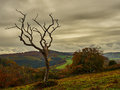 Dead Tree in Foreboding Sky Royalty Free Stock Photo