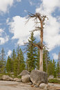 Dead tree in forest Stock Image