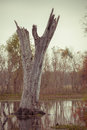 Dead Tree in a Lake Royalty Free Stock Photo