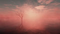 Dead tree in misty lake with cloudy sky at sunrise panoramic shot Stock Photography