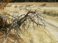 Dead tree roots Royalty Free Stock Photo