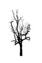 Dead tree silhouette isolated on white background Royalty Free Stock Photography