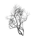 Dead tree silhouette isolated on whte Royalty Free Stock Photo
