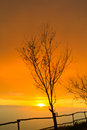 Dead tree in sunset Stock Photography