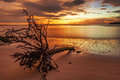 Dead tree trunk on tropical beach in sunset time Stock Photos