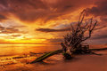 Dead tree trunk on tropical beach in sunset time Stock Image