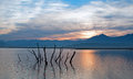 Dead tree trunks and branches poking out of drought stricken Lake Isabella at sunrise in the Sierra Nevada mountains in Central Ca Royalty Free Stock Photo