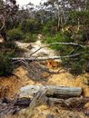 Dead tree trunks on a sandy path in the Australian bush Royalty Free Stock Photo