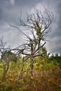 Dead tree under cloudy sky Royalty Free Stock Photos