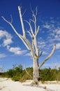Dead Tree on Wild Beach Stock Photos