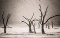 Dead Trees in Deadvlei Royalty Free Stock Photo