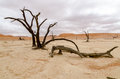Dead trees in Deadvlei, Namibia Royalty Free Stock Photo
