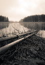 Dead trees lying on a lake shore, sepia toned lake Royalty Free Stock Photo