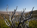 Dead twigs frame Anza Borrego State Park Royalty Free Stock Images
