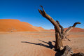 Dead Vlei Royalty Free Stock Image