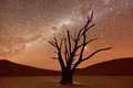 Dead Vlei, Namibia at Dusk Royalty Free Stock Photo