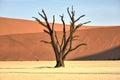 Dead Vlei, Namibia Royalty Free Stock Photo