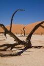 Dead vlei sossusvlei namib desert namibia trees composed onto on salt pan with red sand dunes behind Royalty Free Stock Photos