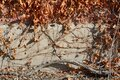 Dead winter leaves and vines Royalty Free Stock Photo