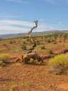 Dead wood arizona desert usa Royalty Free Stock Photo