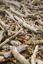 Dead wood on the ground close up of twigs and leaves Stock Photo