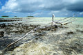 Dead wood on the reef in the shallow lagoon of the tropical atoll rangiroa one of the islands of the tahiti archipelago french Stock Photo