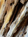 Dead Wood Texture Royalty Free Stock Photo