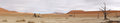 Deadvlei panorama Royalty Free Stock Photo