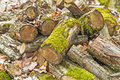 Deadwood heap closeup of a with moss Royalty Free Stock Photos