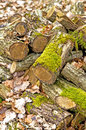 Deadwood heap old with moss Royalty Free Stock Images