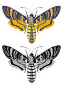 Death's head hawk moth Stock Image