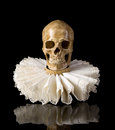 Death skull in elisabethan ruff collar spooky wearing an lace Royalty Free Stock Photos
