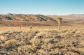 Death valley cactus in the desert landscape with a Stock Image