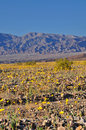 Death Valley in spring Stock Photo