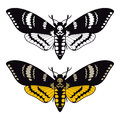Deaths head hawk moth vector illustration Stock Photos