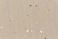 Debris shells on the beach texture Stock Image