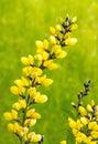 Decadence Lemon Meringue Royalty Free Stock Photo