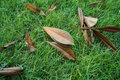 Decayed leaves on grass in the park green Royalty Free Stock Photo