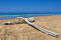 Decayed logs on deserted beach with deep blue sea in the mediterranean area Stock Photos