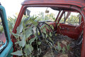 Decayed rustic antique truck overgrown gourds Royalty Free Stock Photos