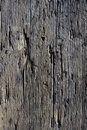 Decayed timber surface Stock Images