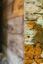 Decaying wood termites edge of the wall which was damage Royalty Free Stock Images