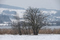 Deciduous bushes lake nature ecology eco environmental protection reed hill snow winter Stock Image
