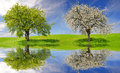 Deciduous and flowering tree on meadow spring landscape Stock Images